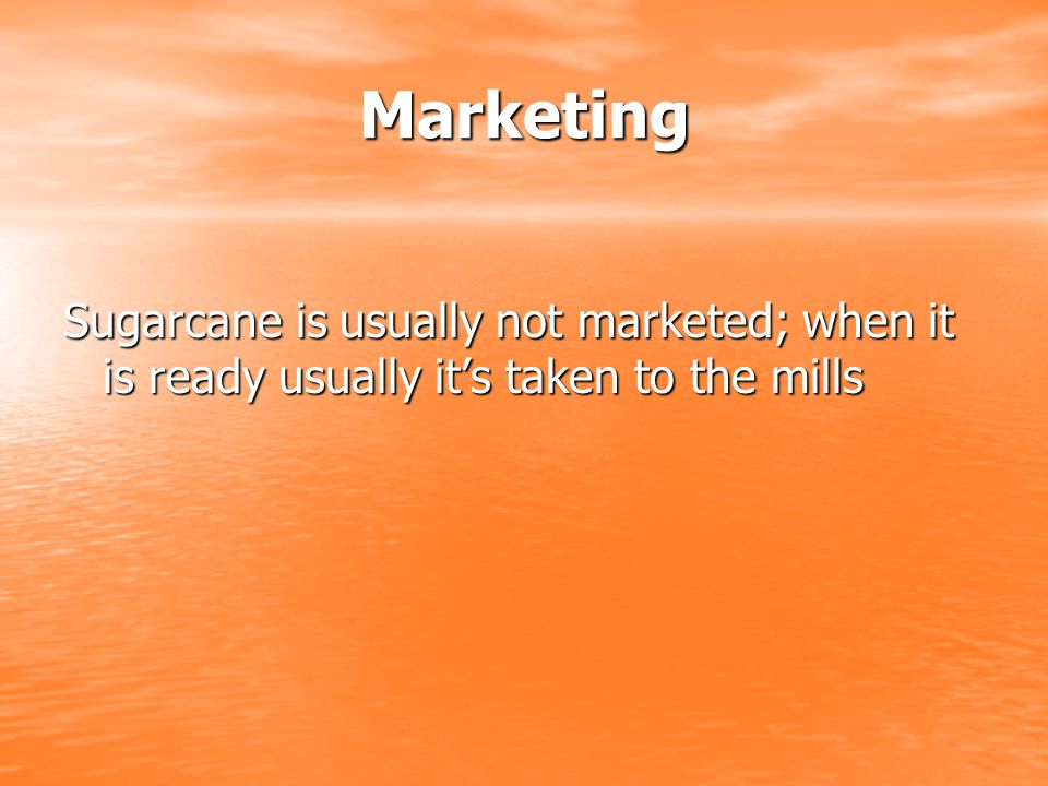 Marketing Sugarcane is usually not marketed; when it is ready usually it's taken to the mills