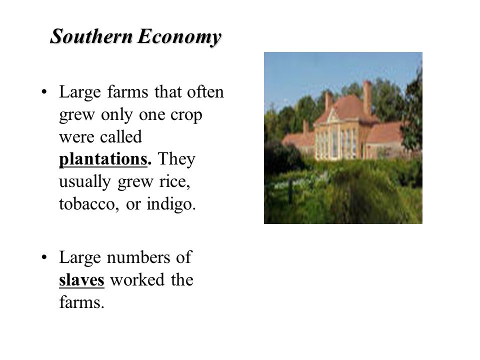 Southern Economy Large farms that often grew only one crop were called plantations. They usually grew rice, tobacco, or indigo.