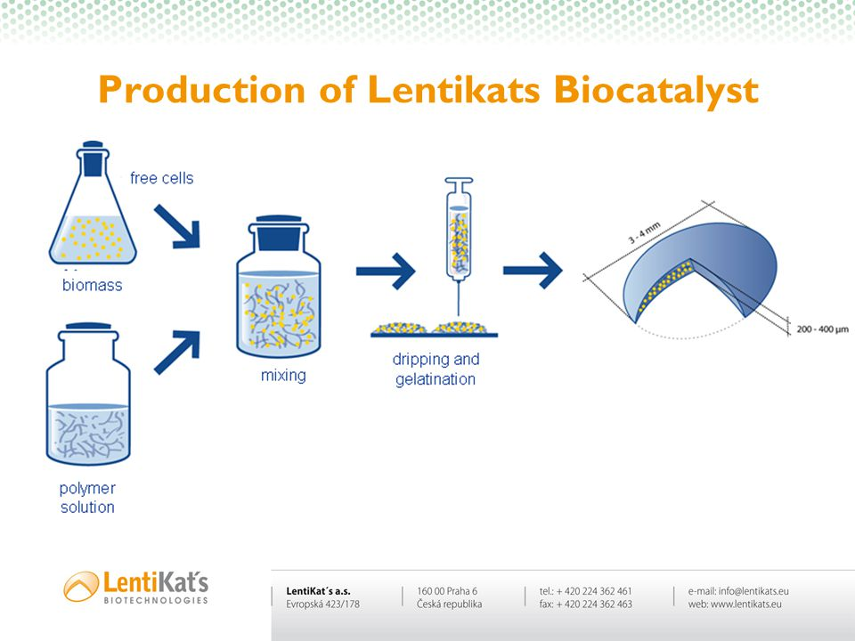 Production of Lentikats Biocatalyst