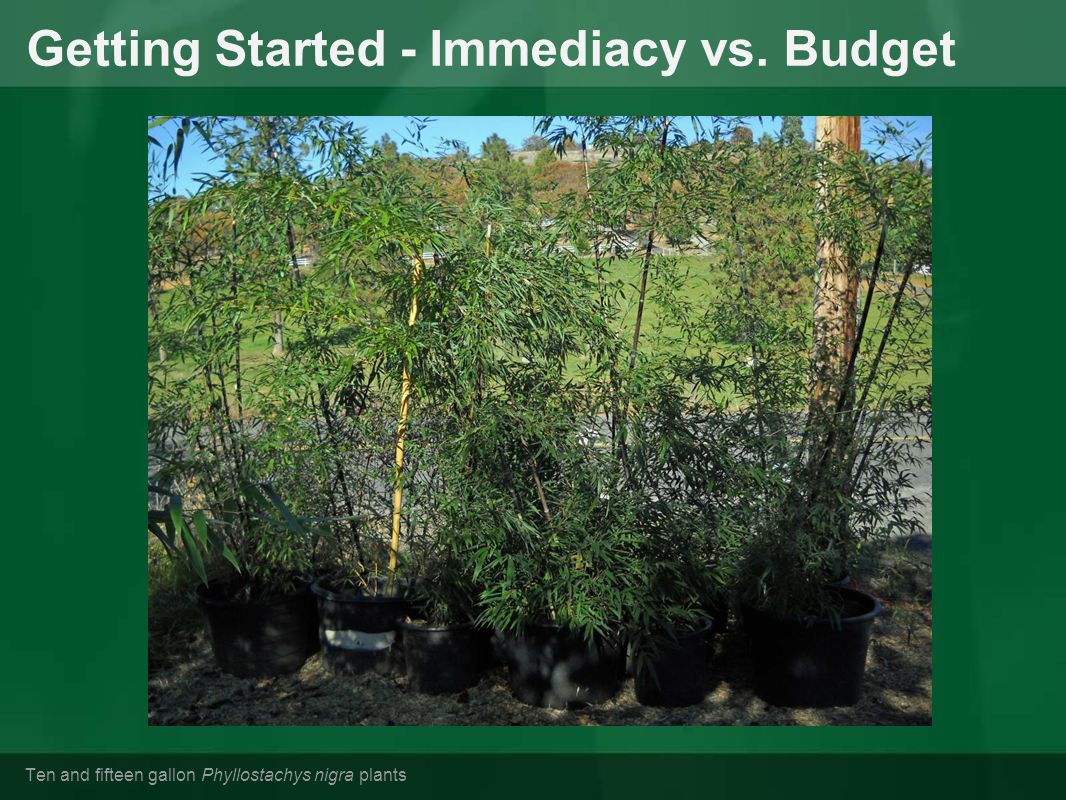 Getting Started - Immediacy vs. Budget