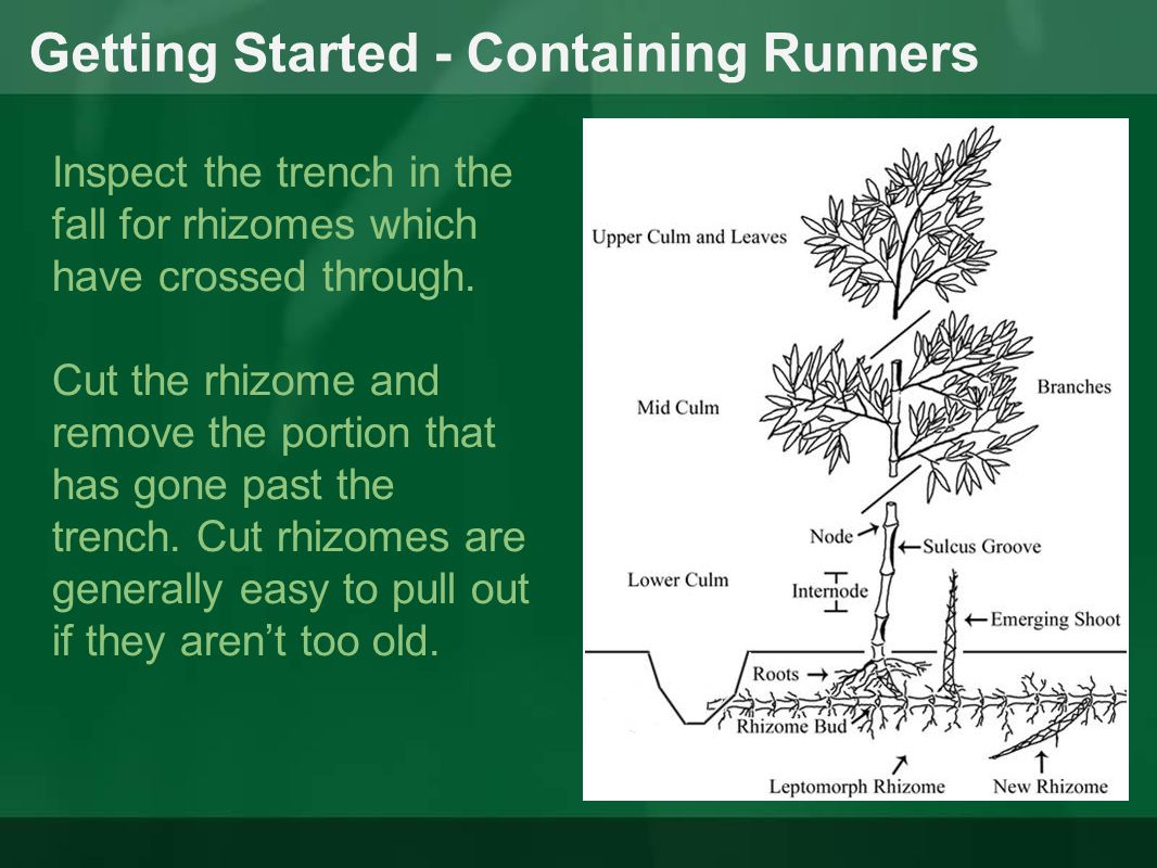 Getting Started - Containing Runners