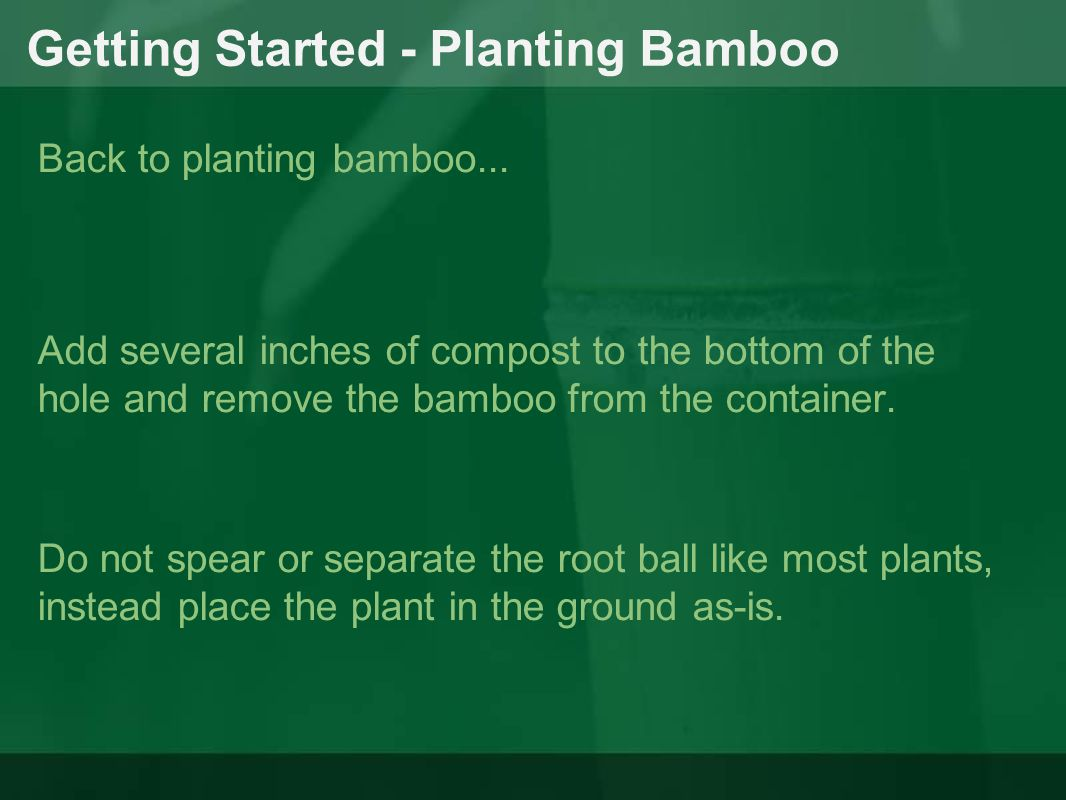 Getting Started - Planting Bamboo Back to planting bamboo...