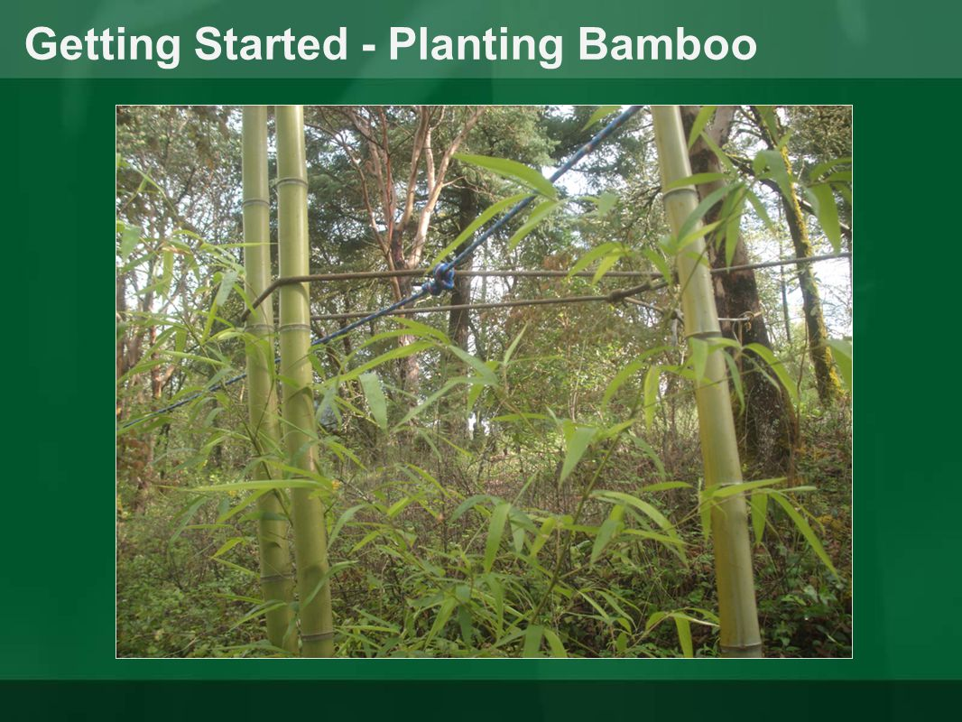 Getting Started - Planting Bamboo