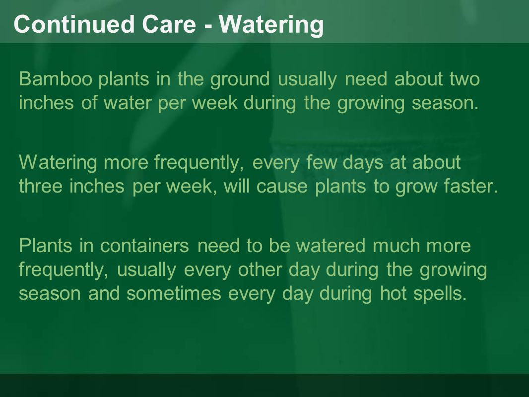Continued Care - Watering