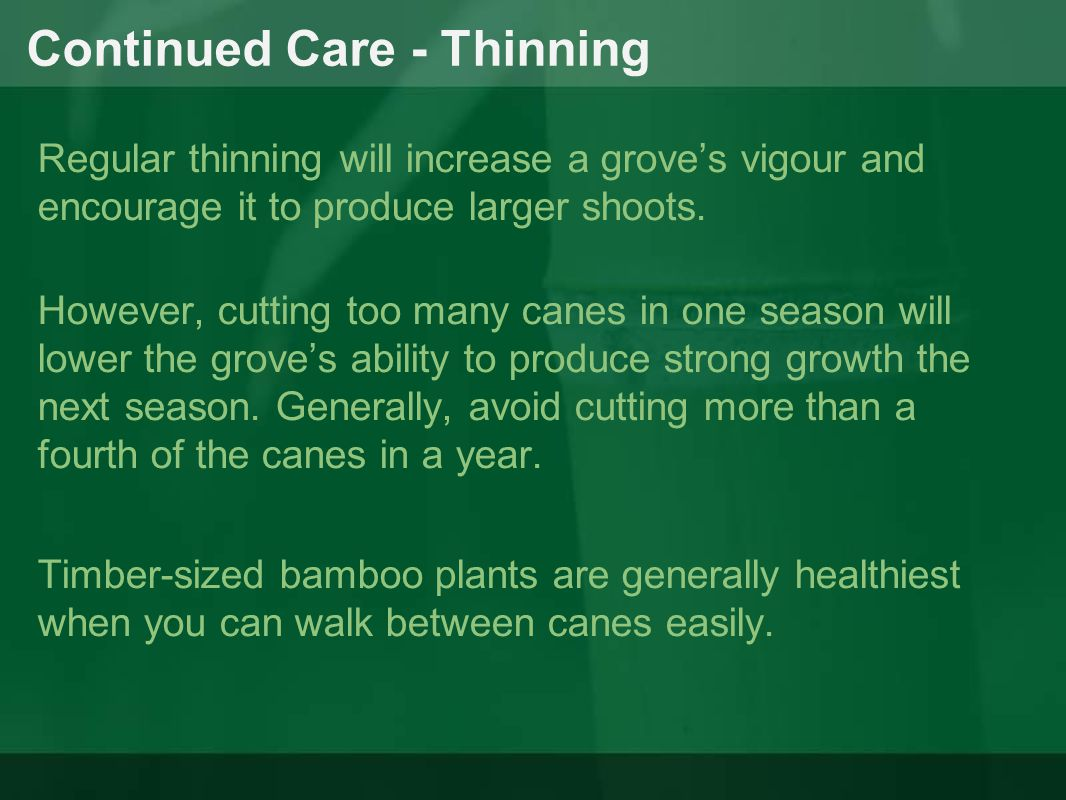 Continued Care - Thinning