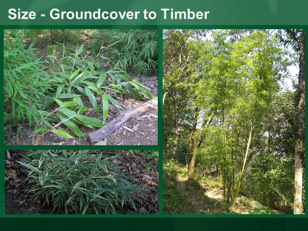 Size - Groundcover to Timber