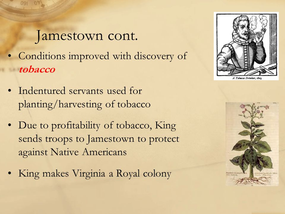 Jamestown cont. Conditions improved with discovery of tobacco