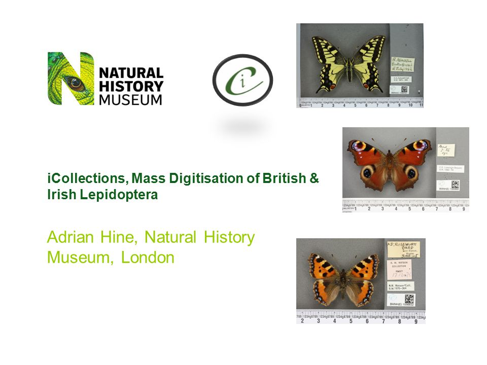 Adrian Hine, Natural History Museum, London