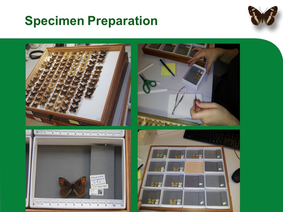 Specimen Preparation Work in teams of TWO. Person 1: preparation & reassembly, person 2: imaging.