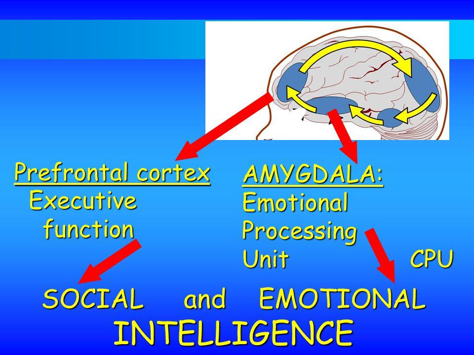 INTELLIGENCE SOCIAL and EMOTIONAL AMYGDALA: Emotional Processing
