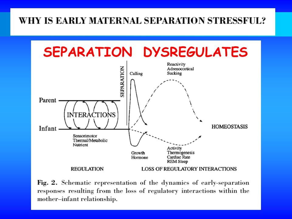SEPARATION DYSREGULATES