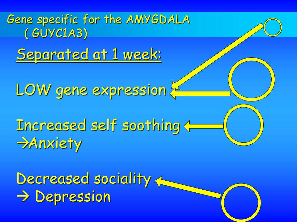 Increased self soothing Anxiety Decreased sociality  Depression