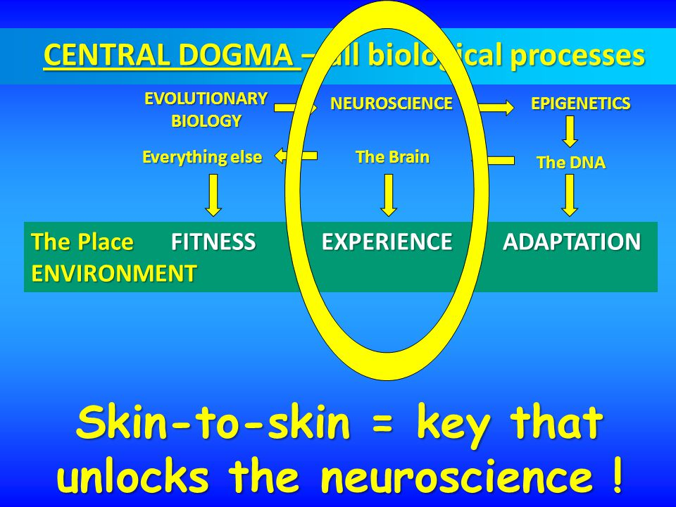 CENTRAL DOGMA – all biological processes