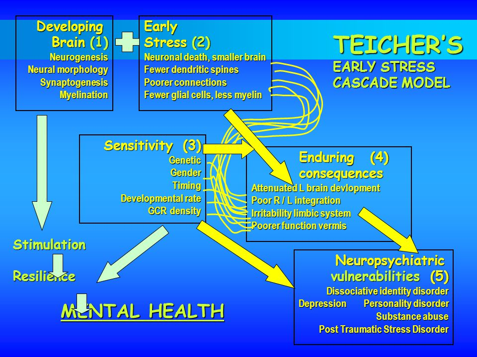 TEICHER'S Developing Brain (1) Early Stress (2) EARLY STRESS