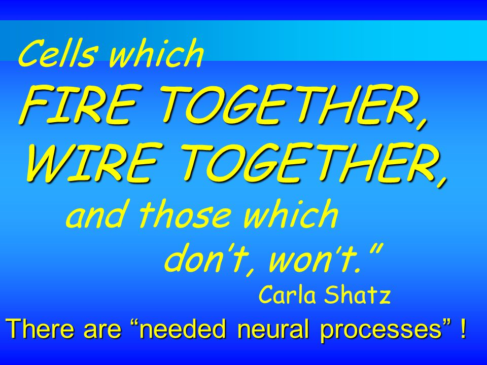 FIRE TOGETHER, WIRE TOGETHER,