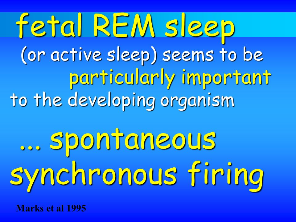... spontaneous synchronous firing particularly important