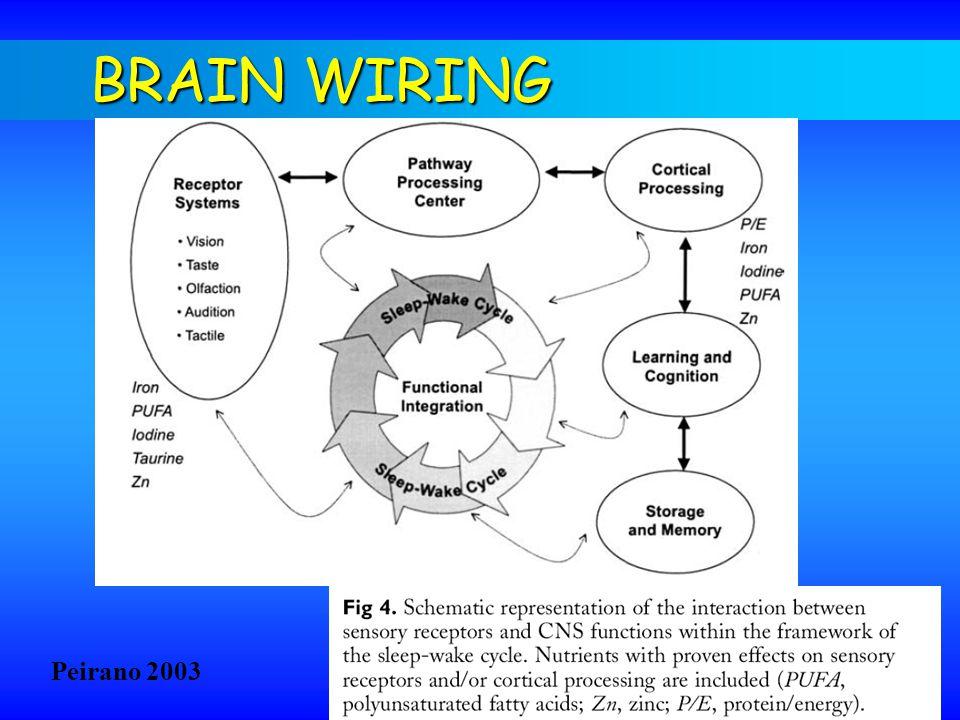 BRAIN WIRING Peirano 2003