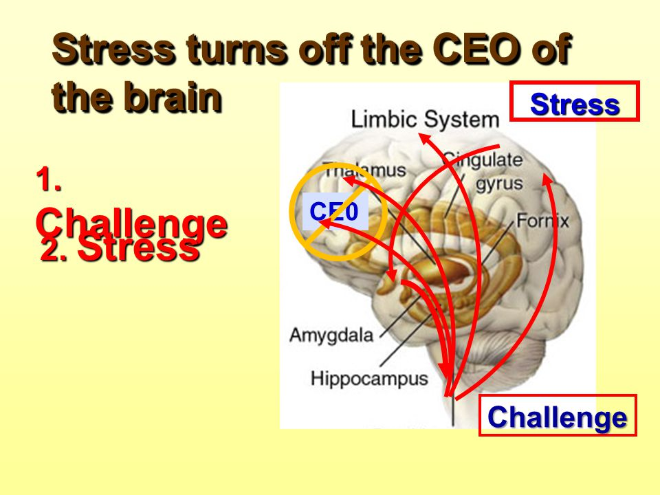 Stress turns off the CEO of the brain