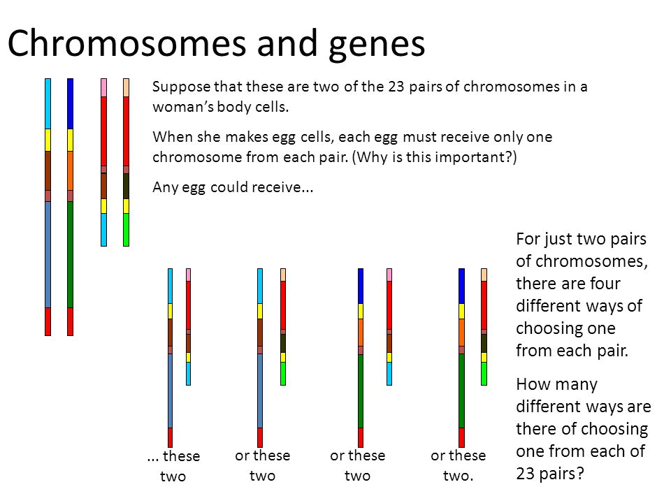 Chromosomes and genes Suppose that these are two of the 23 pairs of chromosomes in a woman's body cells.