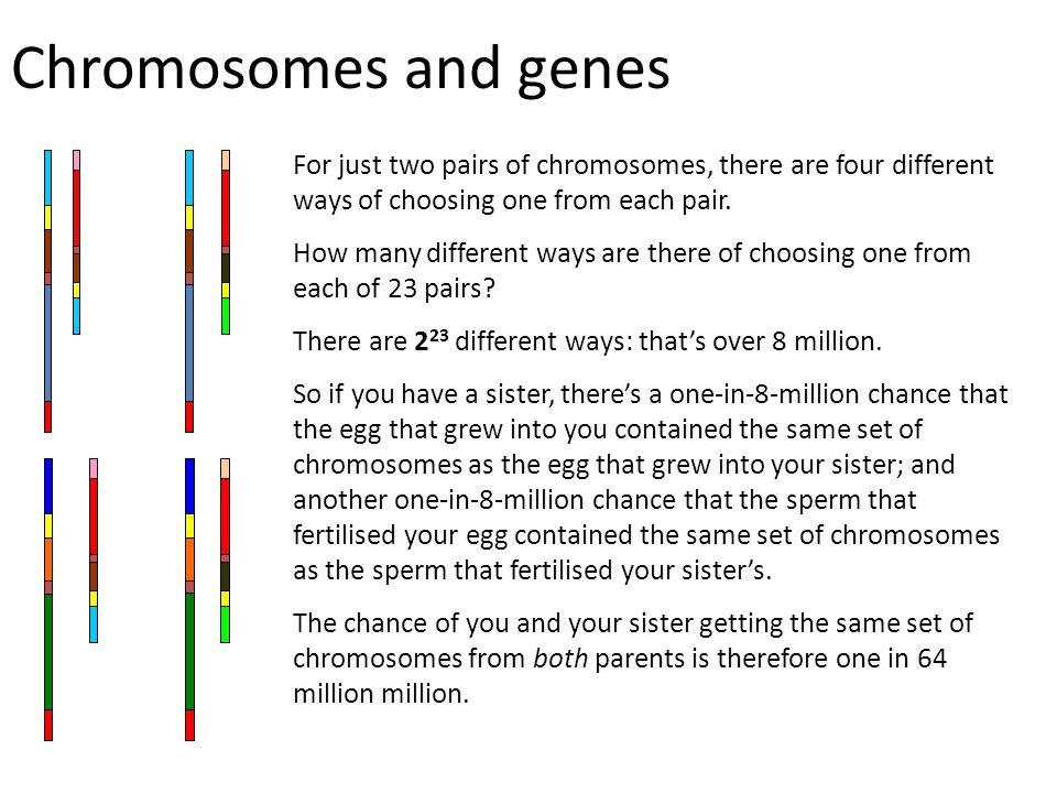 Chromosomes and genes For just two pairs of chromosomes, there are four different ways of choosing one from each pair.