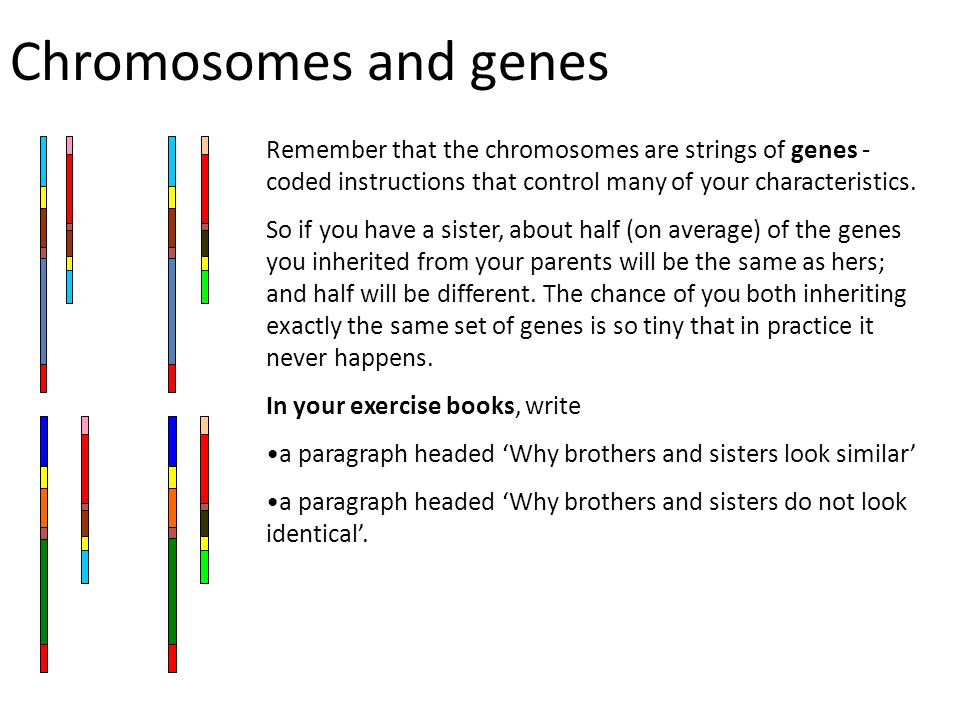 Chromosomes and genes Remember that the chromosomes are strings of genes - coded instructions that control many of your characteristics.