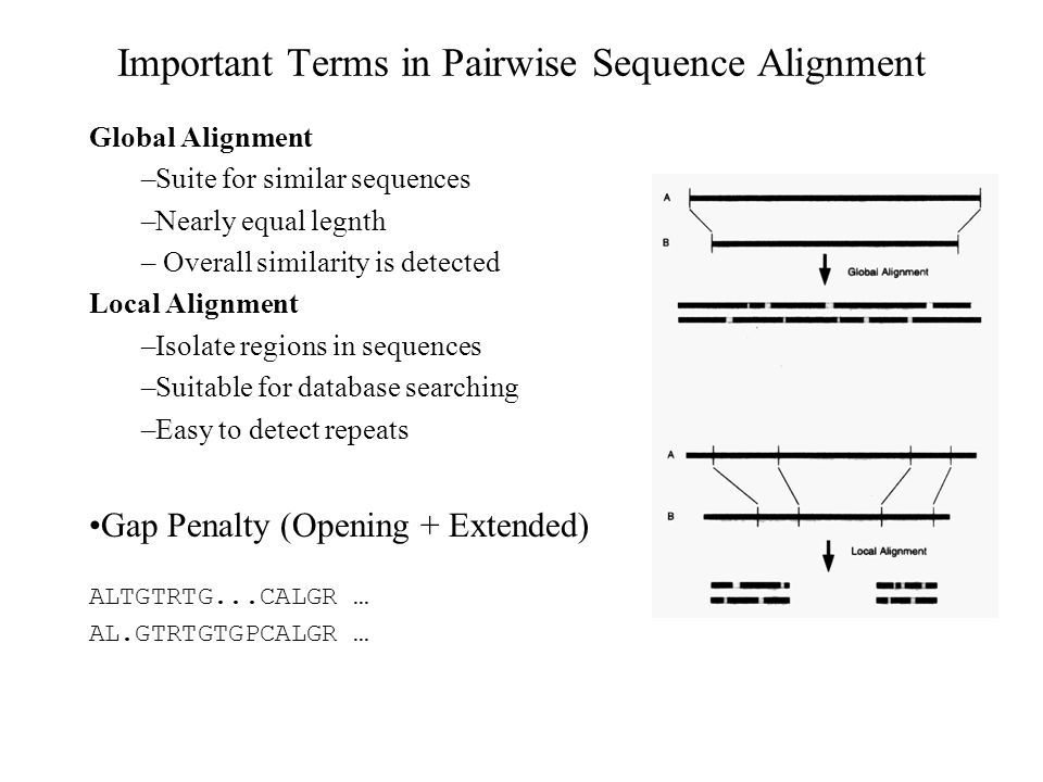 Important Terms in Pairwise Sequence Alignment