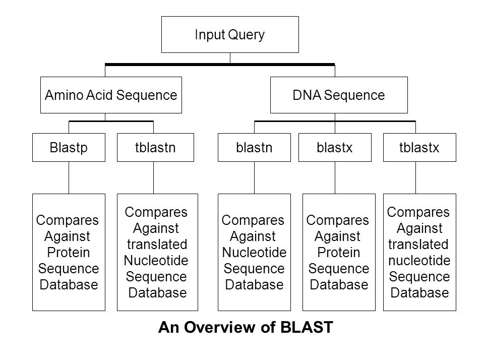 An Overview of BLAST Input Query Amino Acid Sequence DNA Sequence