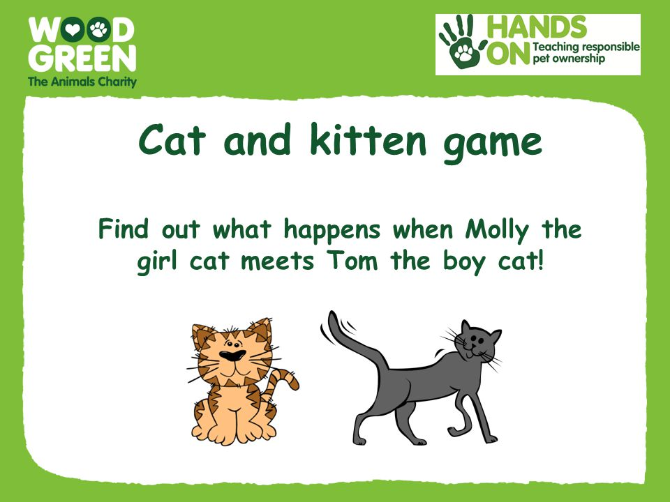 Cat and kitten game Find out what happens when Molly the girl cat meets Tom the boy cat!
