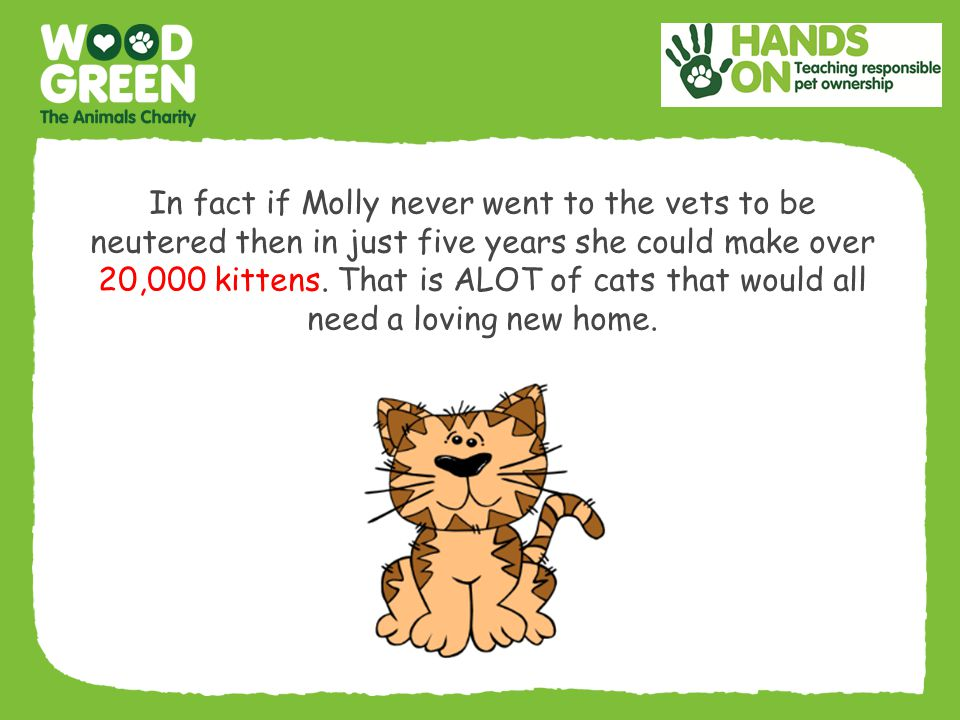 In fact if Molly never went to the vets to be neutered then in just five years she could make over 20,000 kittens.