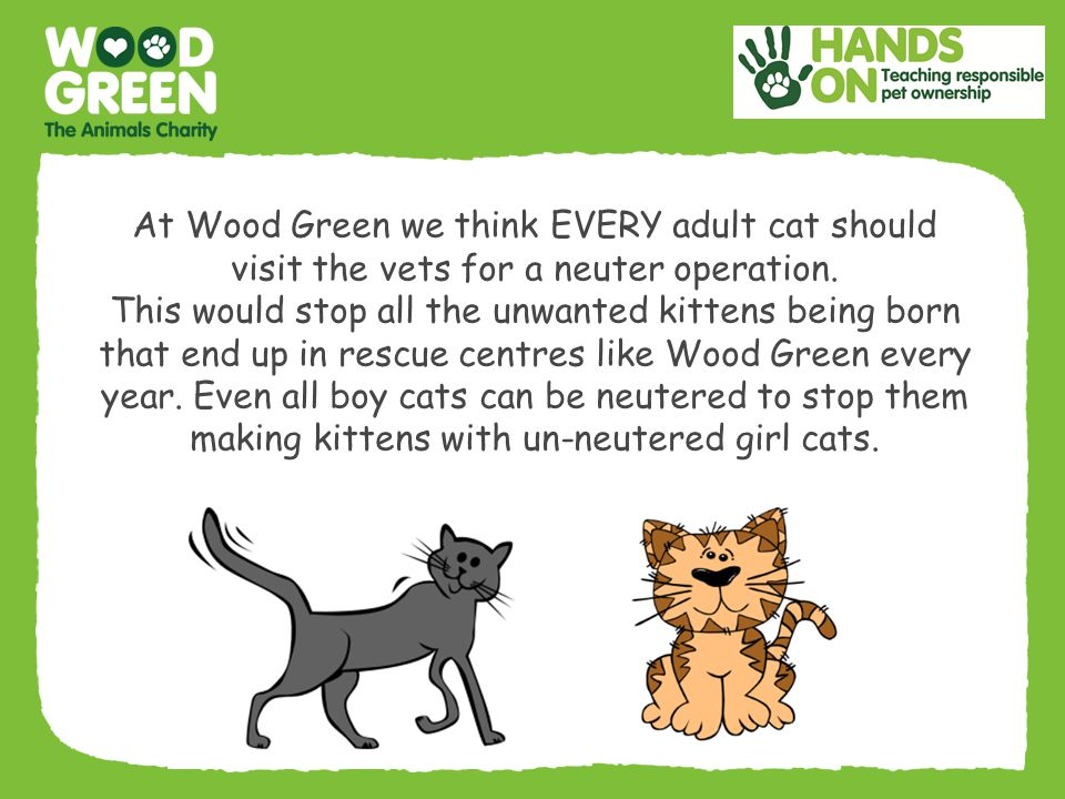At Wood Green we think EVERY adult cat should visit the vets for a neuter operation.