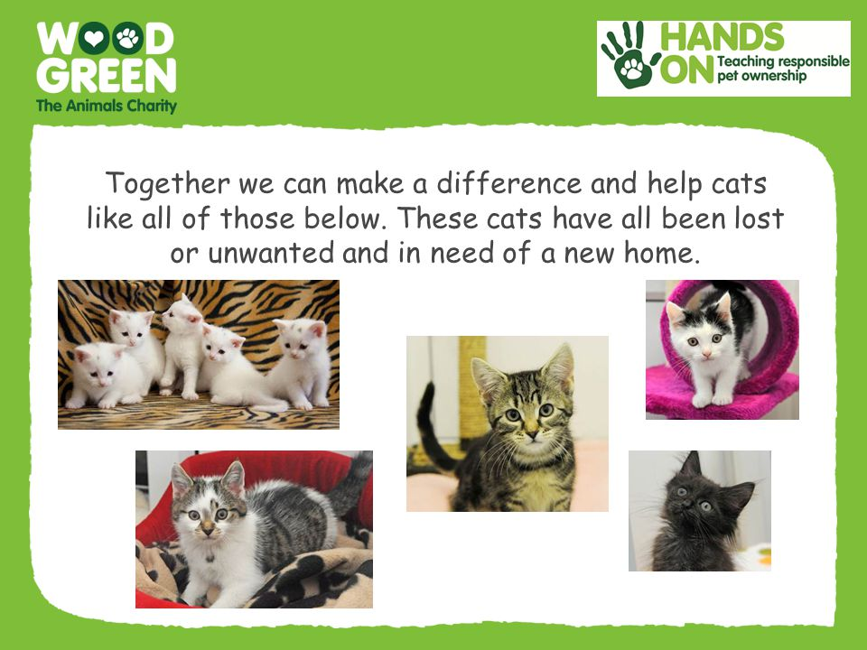 Together we can make a difference and help cats like all of those below.