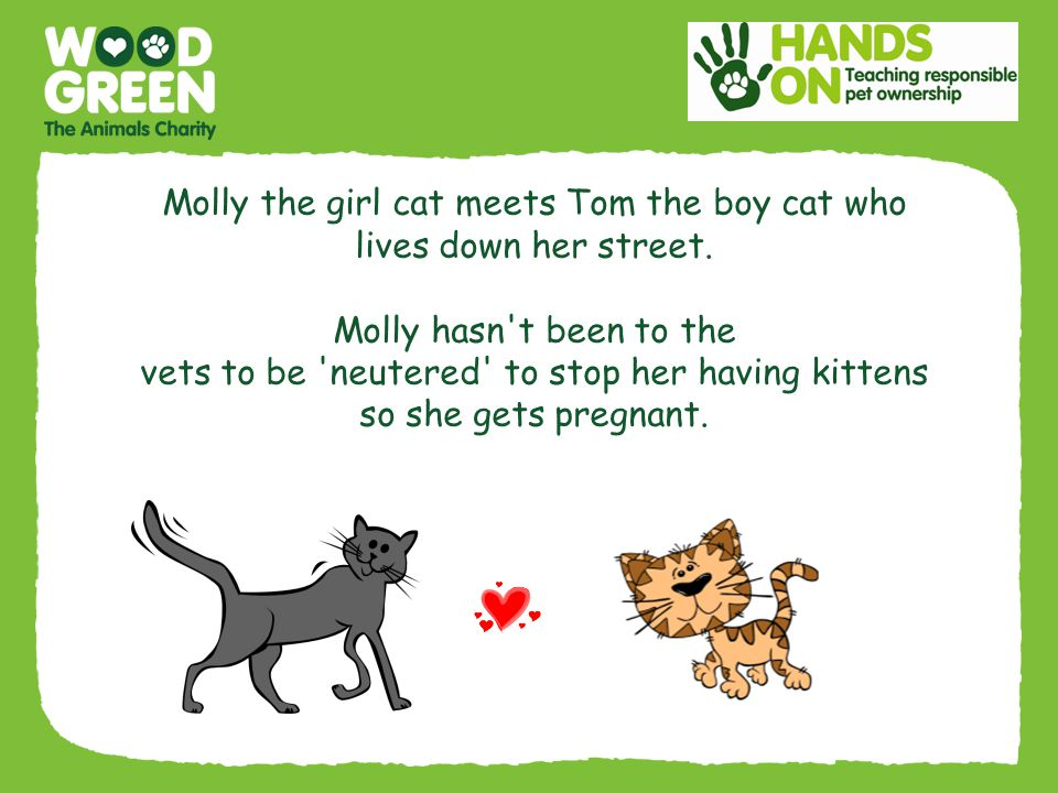 Molly the girl cat meets Tom the boy cat who lives down her street