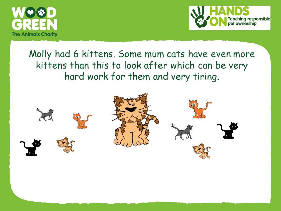 Molly had 6 kittens.