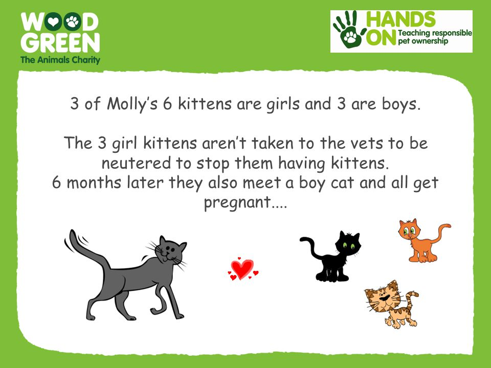 3 of Molly's 6 kittens are girls and 3 are boys.