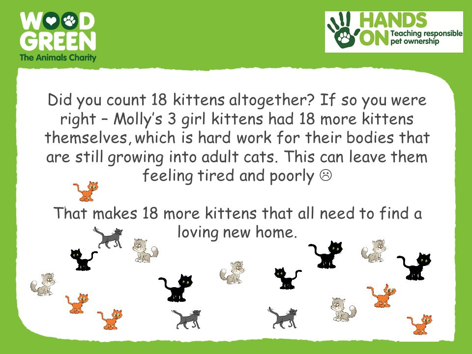 That makes 18 more kittens that all need to find a loving new home.