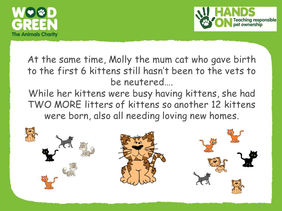 At the same time, Molly the mum cat who gave birth to the first 6 kittens still hasn't been to the vets to be neutered….