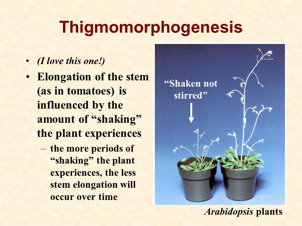 Thigmomorphogenesis Shaken not. stirred (I love this one!)