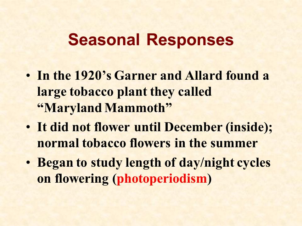 Seasonal Responses In the 1920's Garner and Allard found a large tobacco plant they called Maryland Mammoth