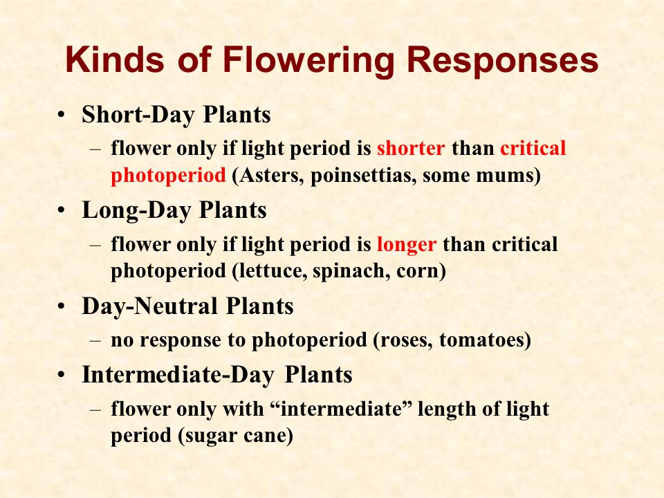 Kinds of Flowering Responses