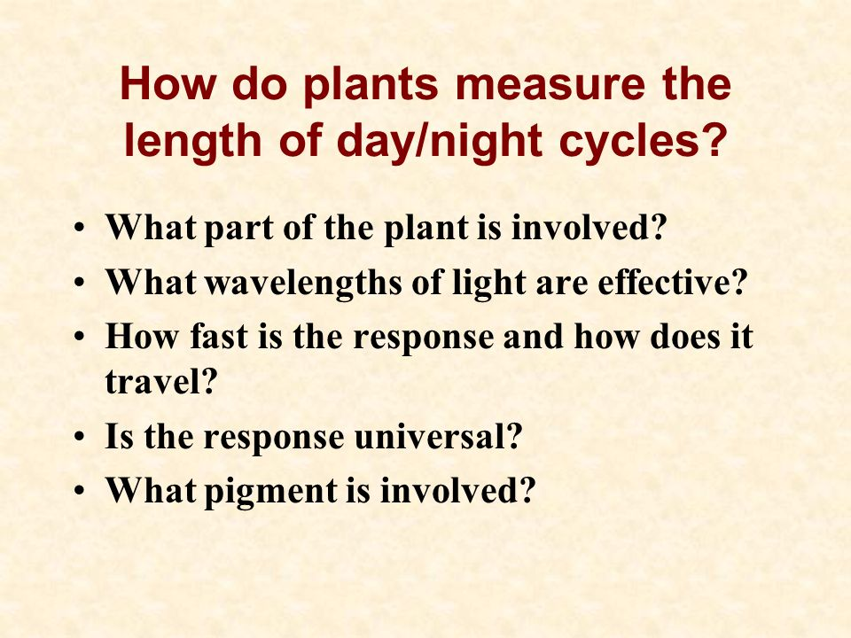 How do plants measure the length of day/night cycles