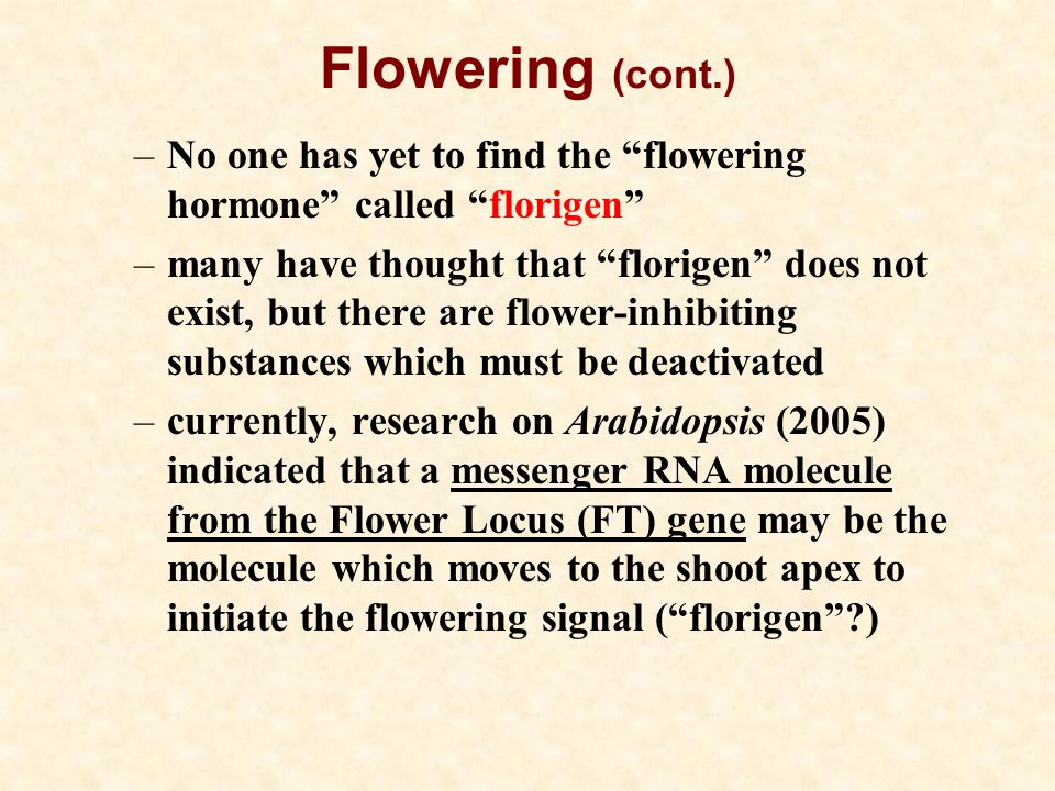Flowering (cont.) No one has yet to find the flowering hormone called florigen