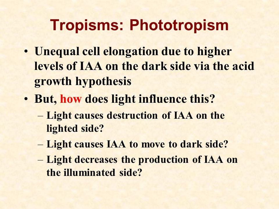 Tropisms: Phototropism