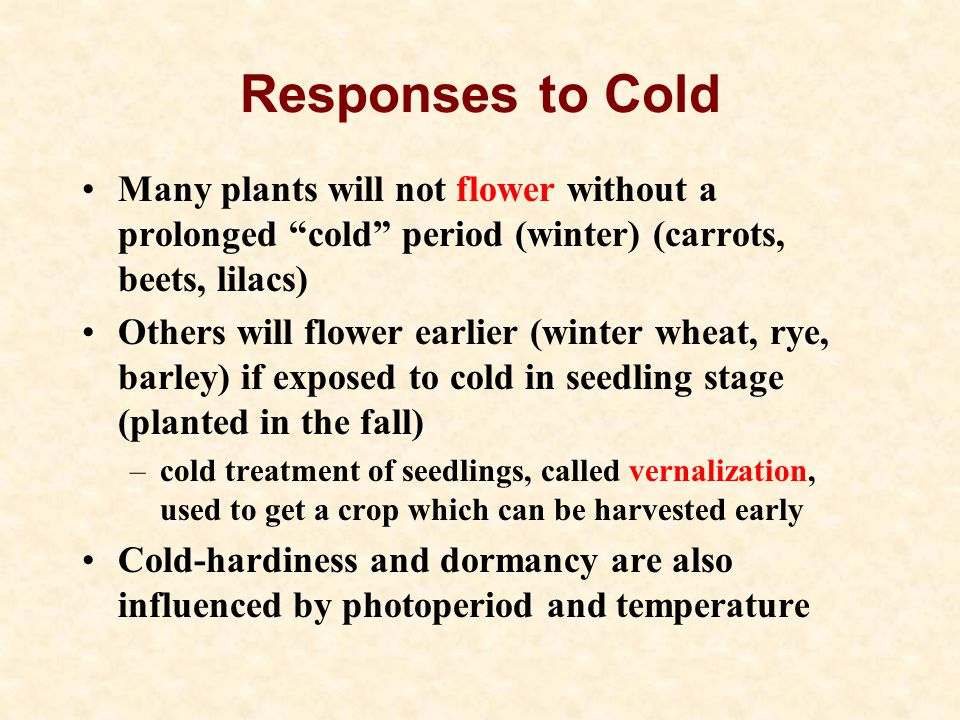 Responses to Cold Many plants will not flower without a prolonged cold period (winter) (carrots, beets, lilacs)