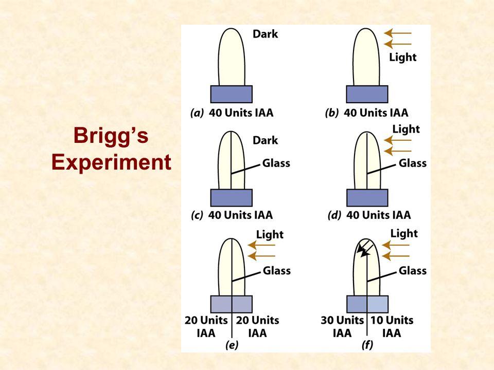Brigg's Experiment