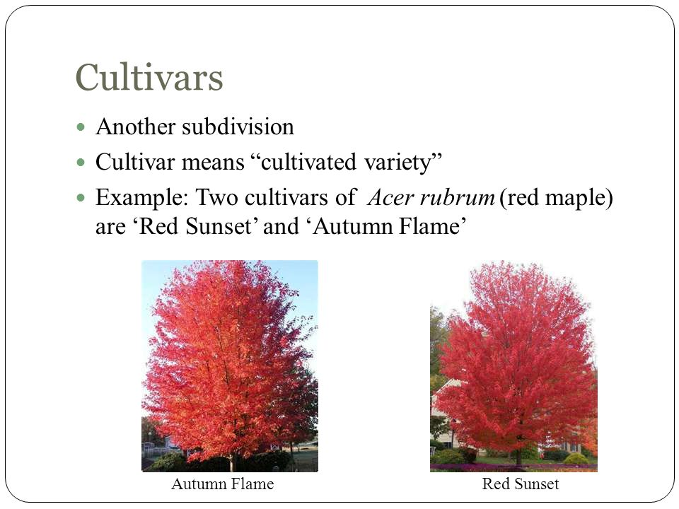 Cultivars Another subdivision Cultivar means cultivated variety