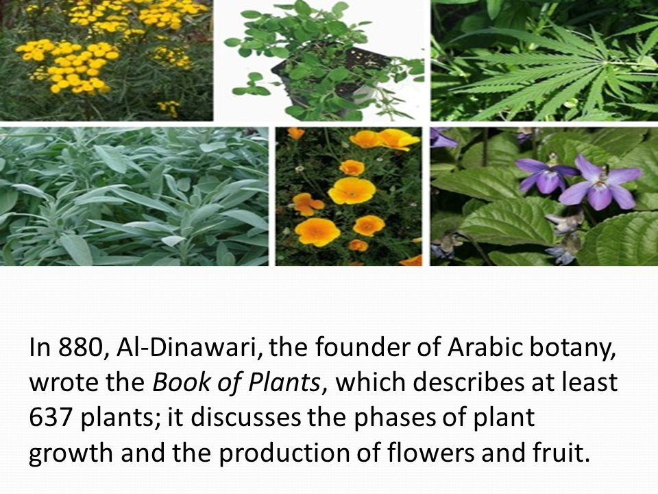 In 880, Al-Dinawari, the founder of Arabic botany, wrote the Book of Plants, which describes at least 637 plants; it discusses the phases of plant growth and the production of flowers and fruit.