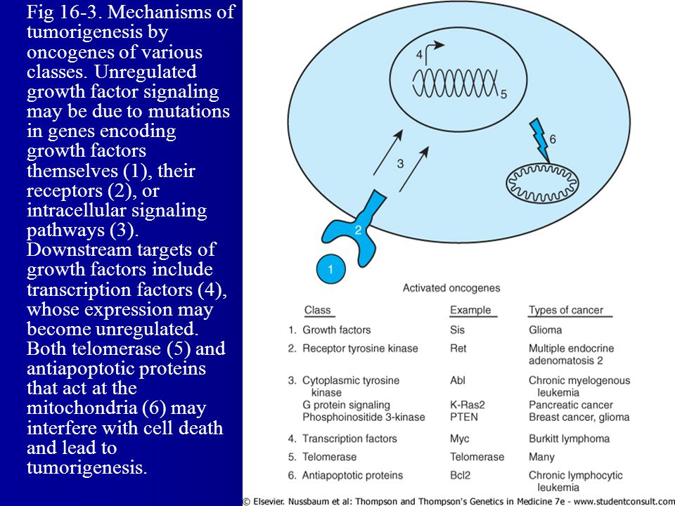 Fig 16-3. Mechanisms of tumorigenesis by oncogenes of various classes