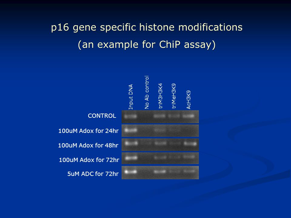 p16 gene specific histone modifications (an example for ChiP assay)