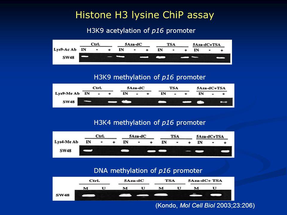 Histone H3 lysine ChiP assay