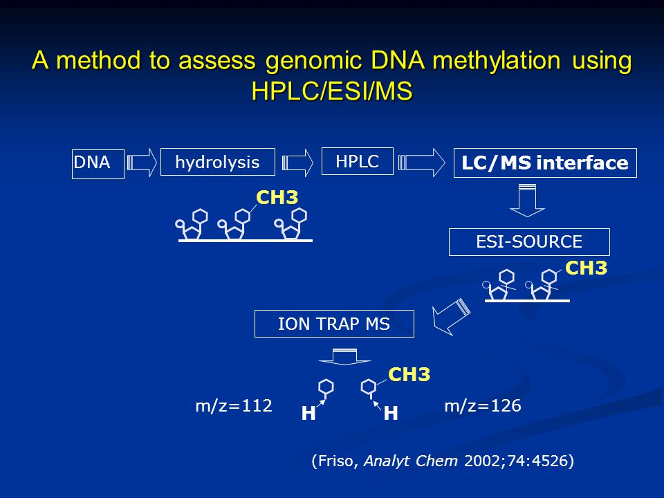 A method to assess genomic DNA methylation using HPLC/ESI/MS